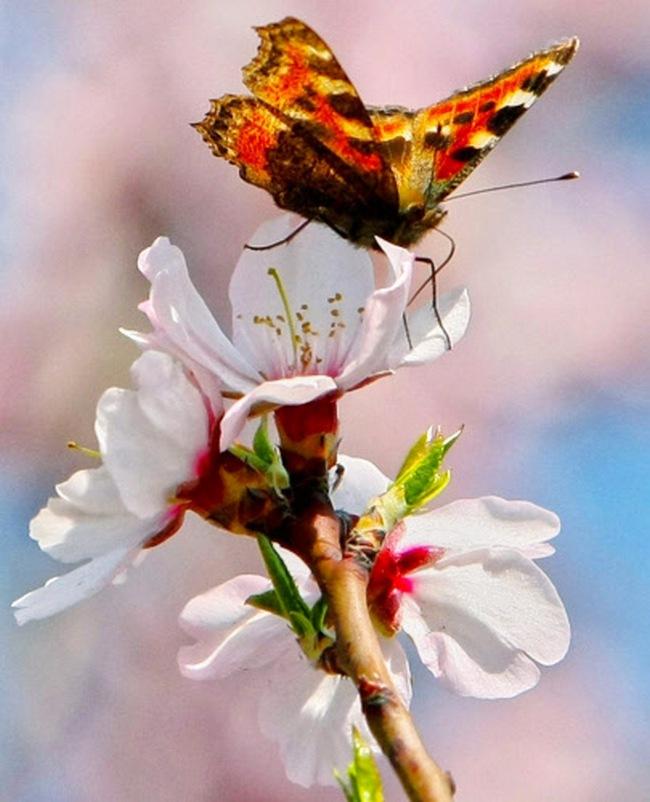 Kashmir Spring