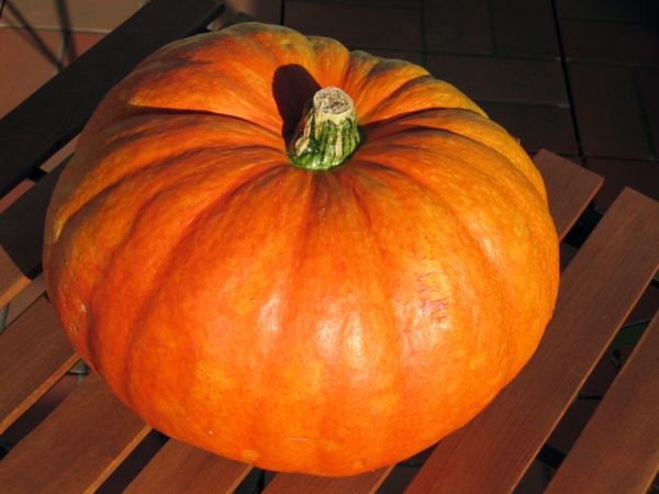 Indian Vegetable for Summer: Pumpkin (kaddu)