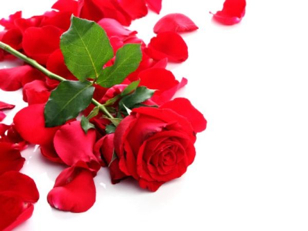 Rose Rose is particularly beneficial to dry and sensitive skin. Rosewater and oil are used in skin care cosmetics as they are effective astringents and exerts cleansing, toning and soothing effect on the skin. It effectively moisturises and hydrates the