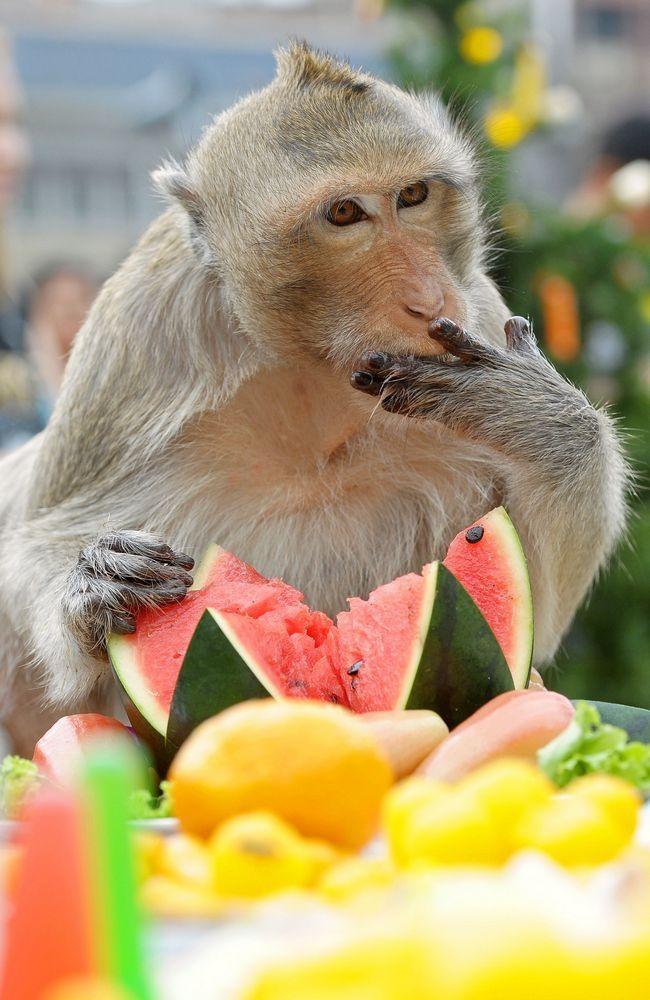 Monkey Buffet in Bangkok