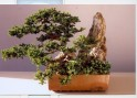 Bonsai exhibition