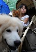 PICS: World Animal Day