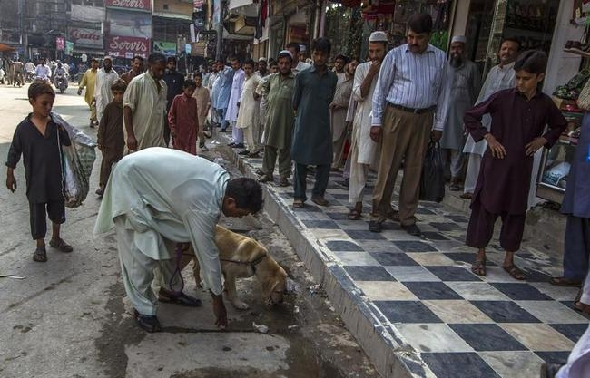 A member of a police bomb squad patrols with his sniffer dog during a bomb search operation in Peshawar