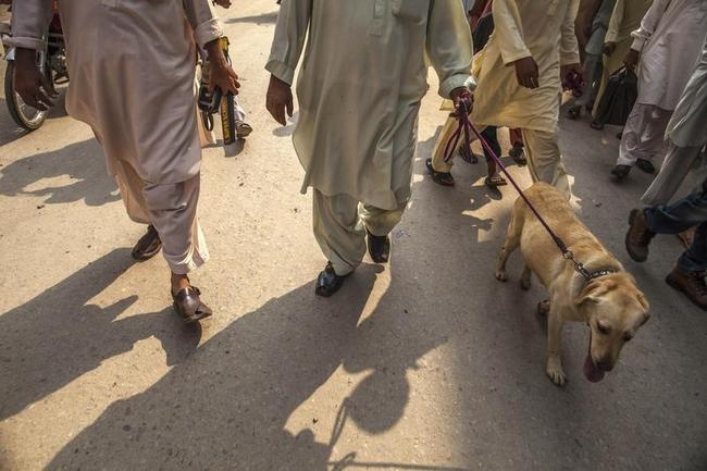 Members of a police bomb squad patrol with their sniffer dog during a bomb search operation in Peshawar
