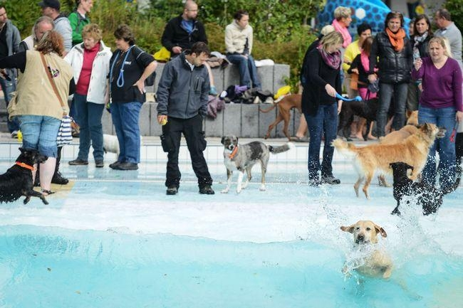 PICS: Dog Bathing Day in Germany