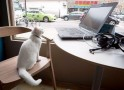 Meow Meow! Cat Cafe in New York