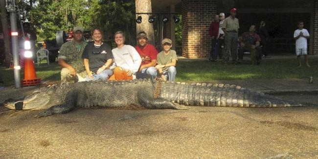 The 15-Foot Alligator