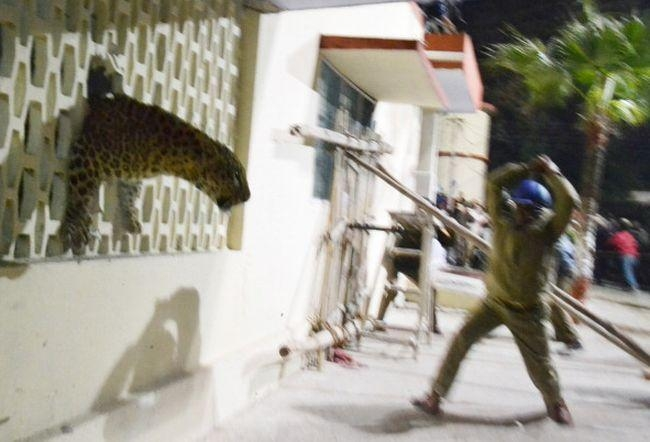 Leopard Causes Havoc in Meerut