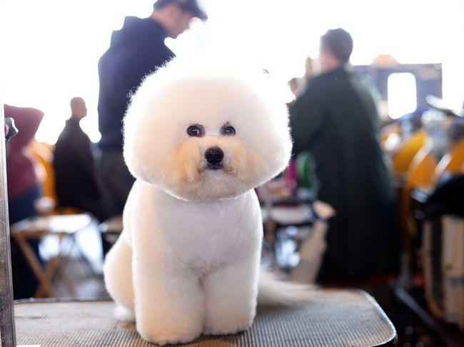 Westminster Kennel Club 138th Annual Dog Show