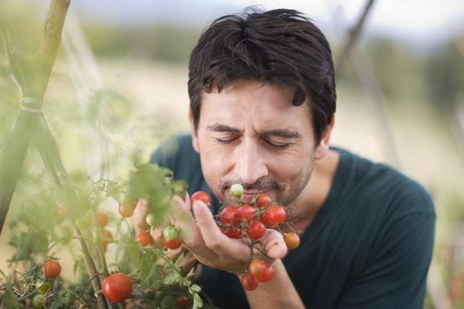 Food odour