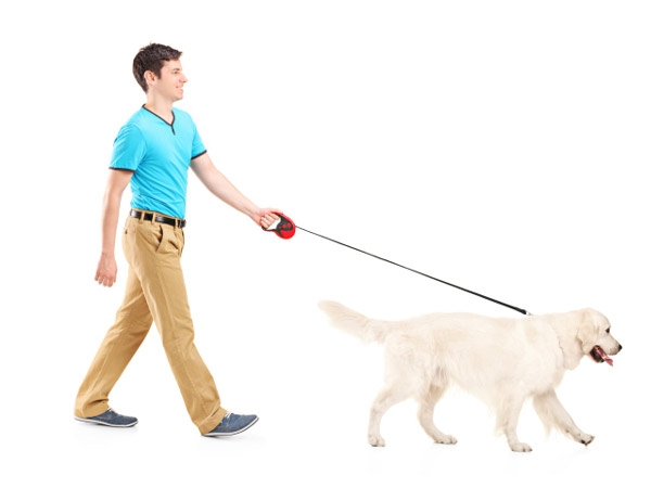 Take your dog for a walk