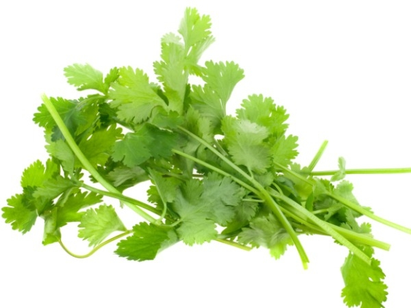 5 Most Healthy Ingredients For Indian Cooking Fresh cilantro