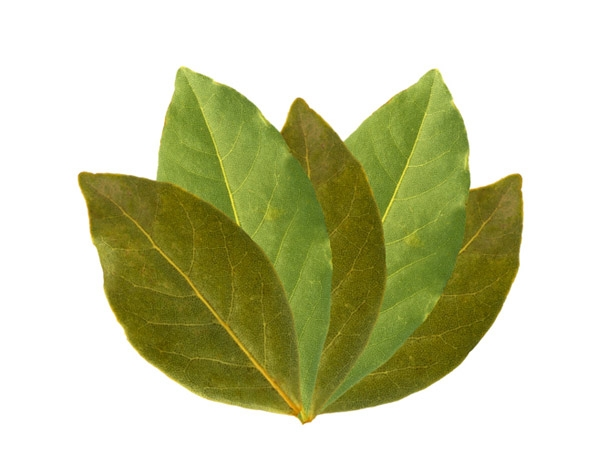 Bay leaves as bug repellent