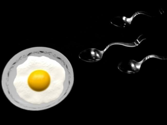 Lifespan of sperm