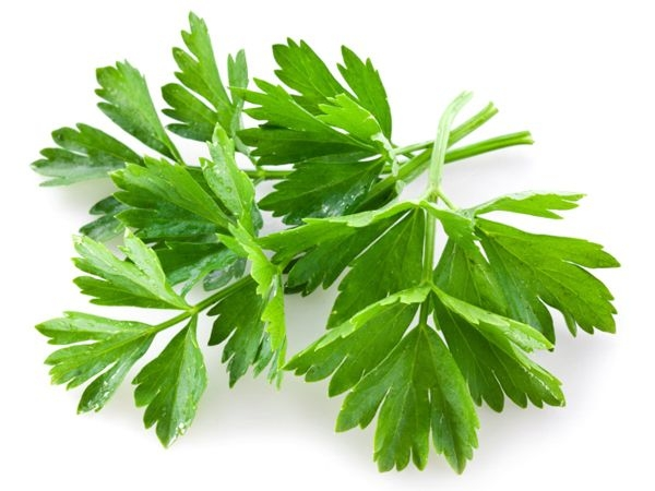 16 Healthy Foods for Your Dog Parsley